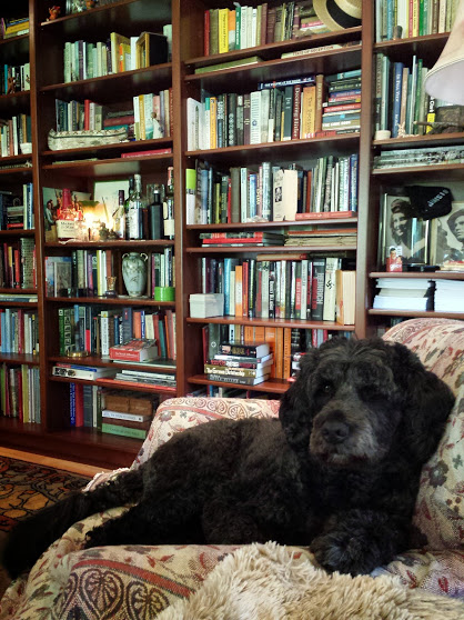 Author Linda Needham's curly, medium sized black dog in the foreground with wall of filled bookshelves in Linda Needham's home library in the background.